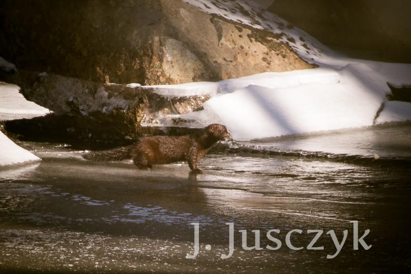 Jusczyk2021-2841.jpg