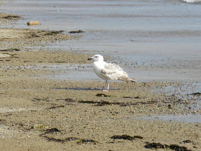 2011 May Gloucester 054.JPG