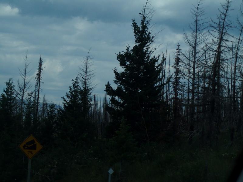 2008-07-24-YOCAMA-Montana_3513.jpg