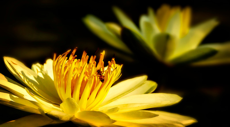 Lily and Honey Bee - 9.jpg