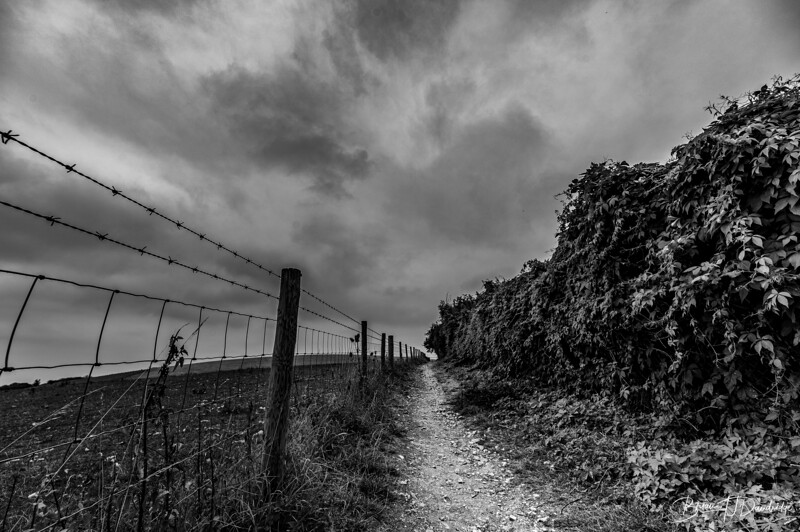 Thw Lonely Path