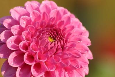 Westhoek 2005 - De bloemen