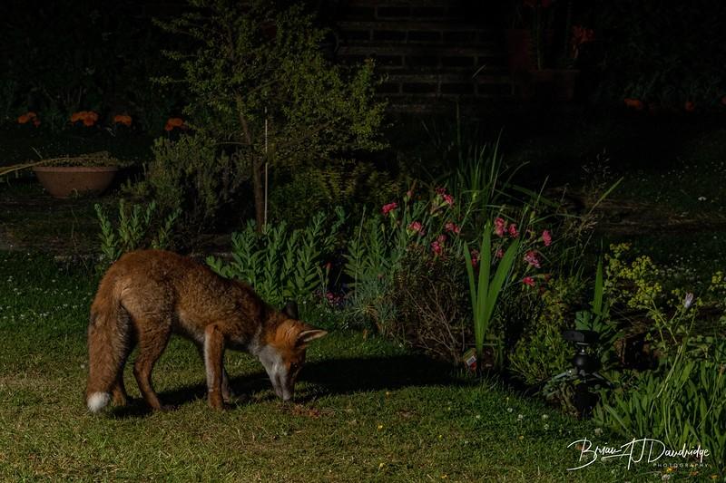 Garden Night Shoot-7271.jpg