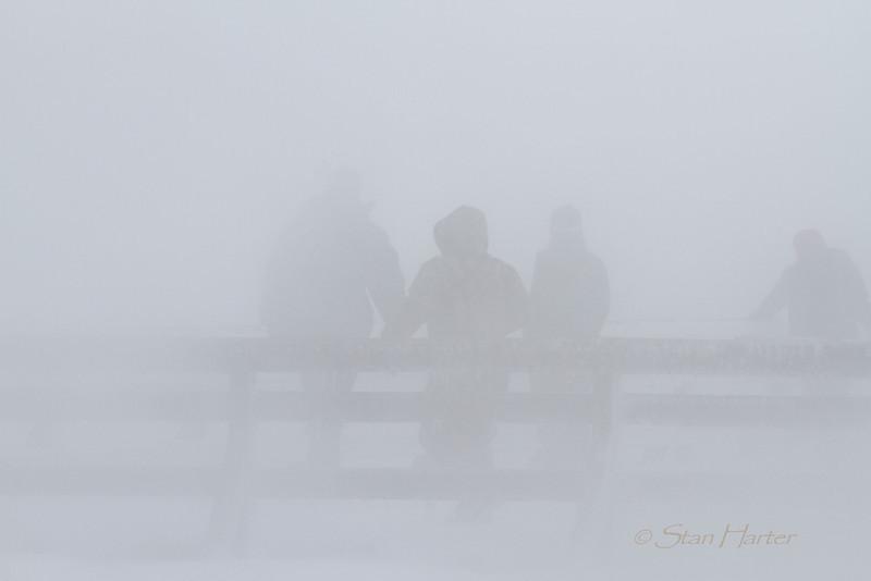 Misty Observers.jpg