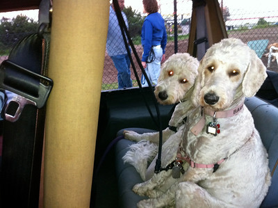 Dogs In The Jeep