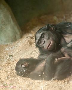 Zoo pics