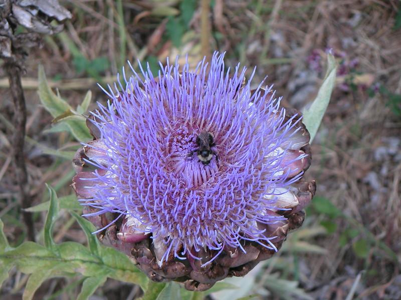 Bee.jpg