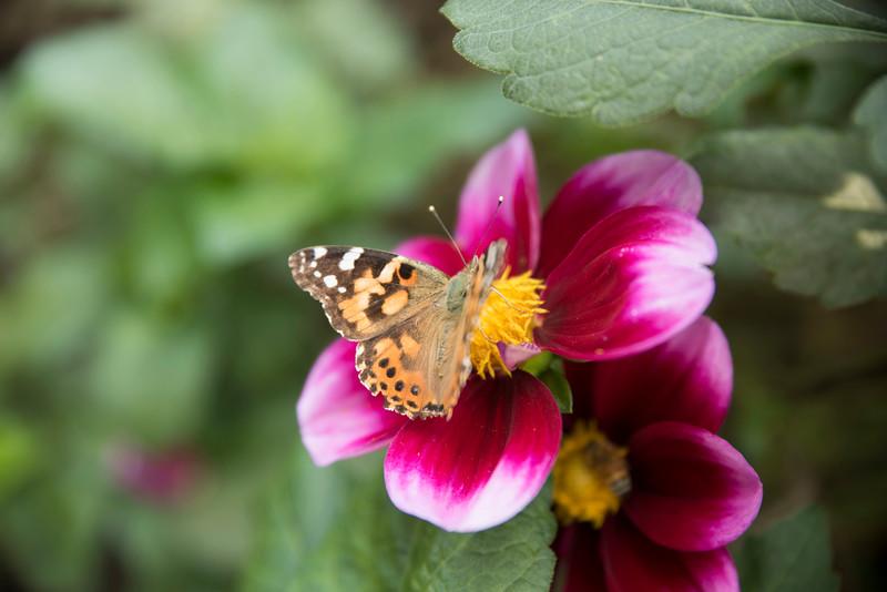Chicago Botanic Garden 033.jpg