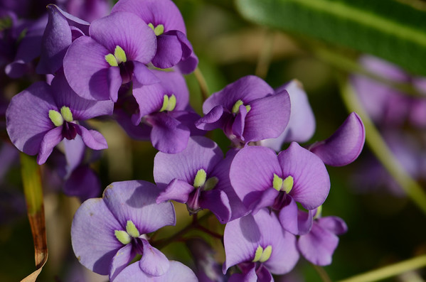 For fun, the crazy purple flowers of the Yuraygir National Park.