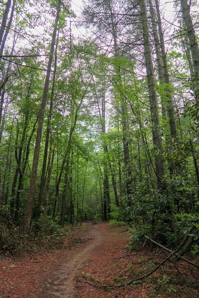Lower Sidehill Trail -- 2,300'