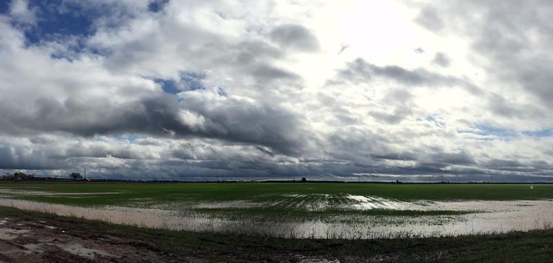 Elk Grove storm.jpg