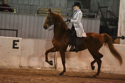 22. Juvenile 3 Gaited Show Pleasure