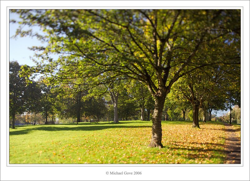 Clifton park trees (69700574).jpg