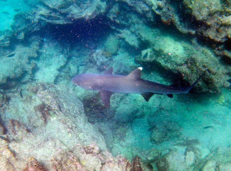 underwater-43.jpg