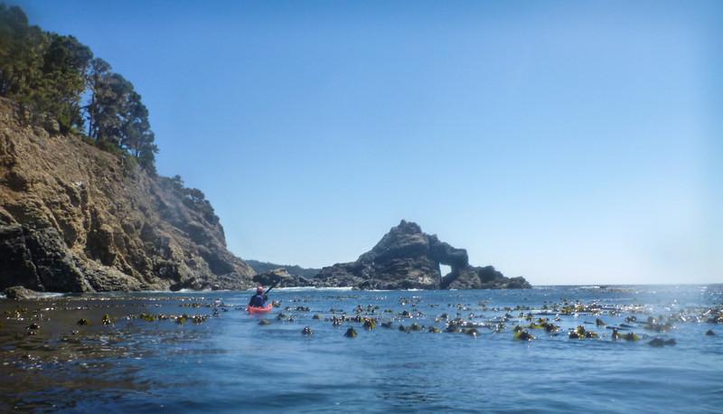 bobbing kelp heads