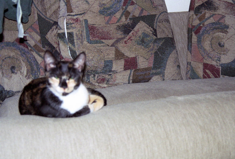 2003 12 - Cats 53.jpg