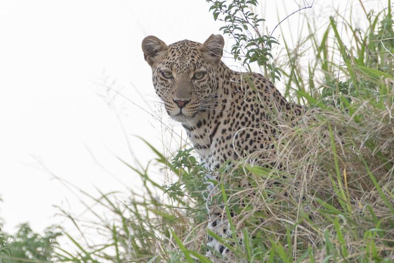 Africa - 101616 - 6707-Edit.jpg