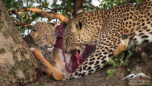 Hunters and Scavengers - Kenya and Tanzania 2020