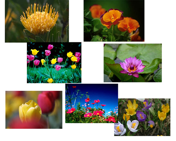 More flowers to choose from. 2psd.jpg