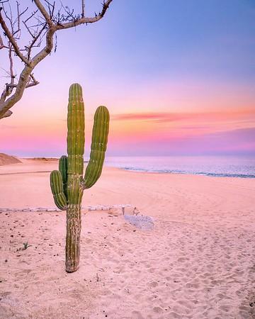 Cabo's captivating natural wonders