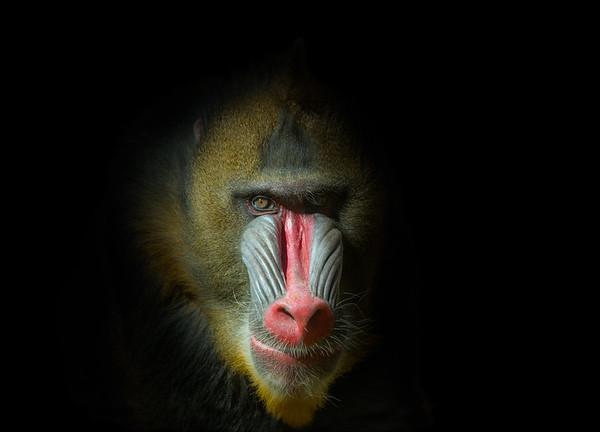 Animal Portrait Series Gallery
