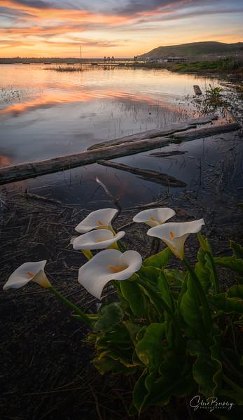 Lagoon Callas