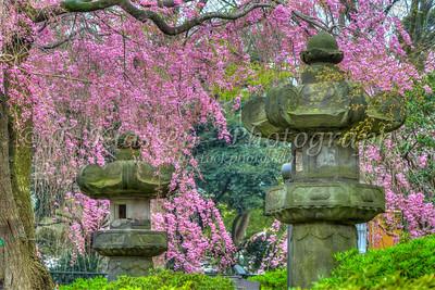 Ueno Onshi Park, Taito, Tokyo, Japan