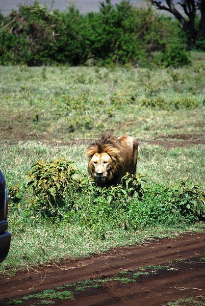 Ngorongoro (130).JPG