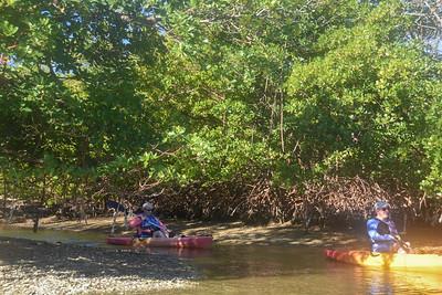 9AM Heart of Rookery Bay Kayak Tour - Foat