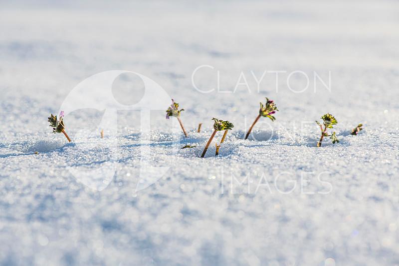 wf_backyard_snow_35.jpg