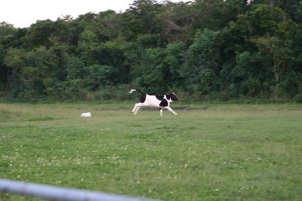 2004-12-04 - Curious Cows