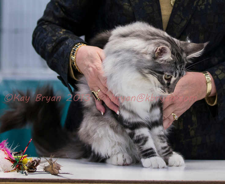 CatShow2014104.JPG