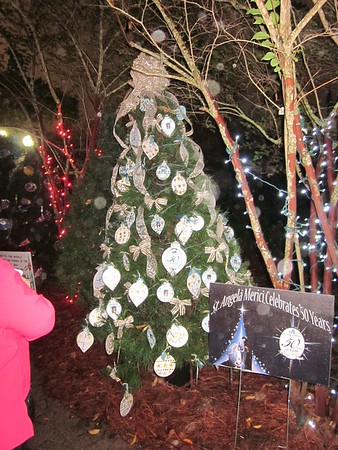 2013-11-22 SAM City Park Christmas Tree