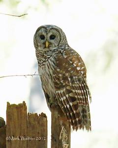 ANIMALS,BACKYARD BIRDS, BUTTERFLIES, DRAGON FLIES, & OWL