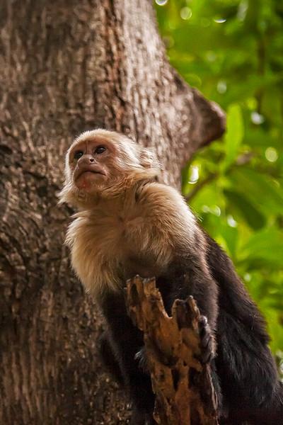 Costa Rica 2016 20160404-15-19-_MG_2489-006-Edit.jpg