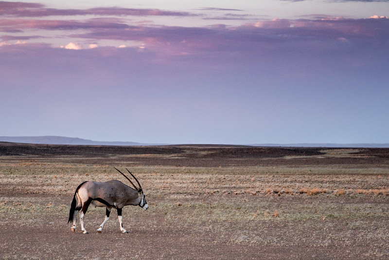 The Lonely Oryx