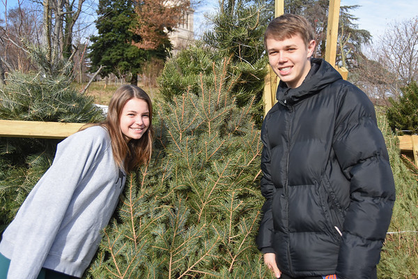Getting Christmas Tree - December 2019
