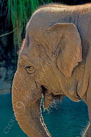 Indian Elephant Wildlife Photography