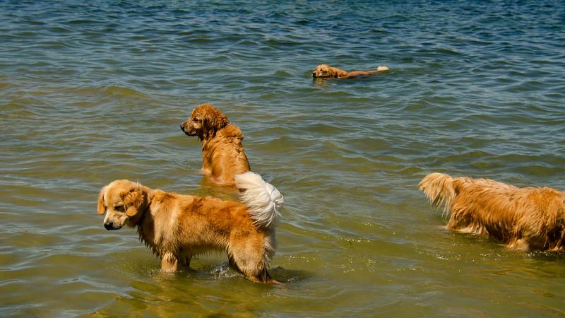 PuppyParty18-203.jpg