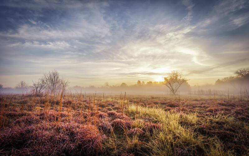 misty-morning-flower-mound-texas.jpg