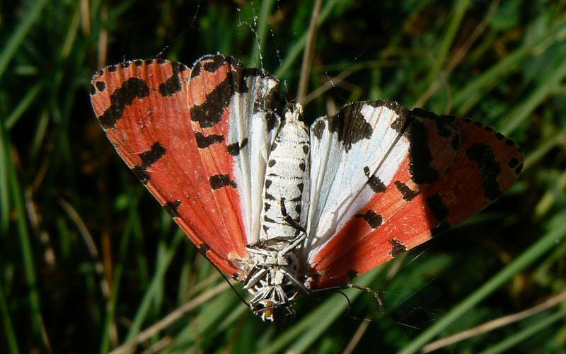 Bella Moth 793 Nov 5, 2008  7:31 a.m.  P1040793 Bella Moth at gas station/ church area