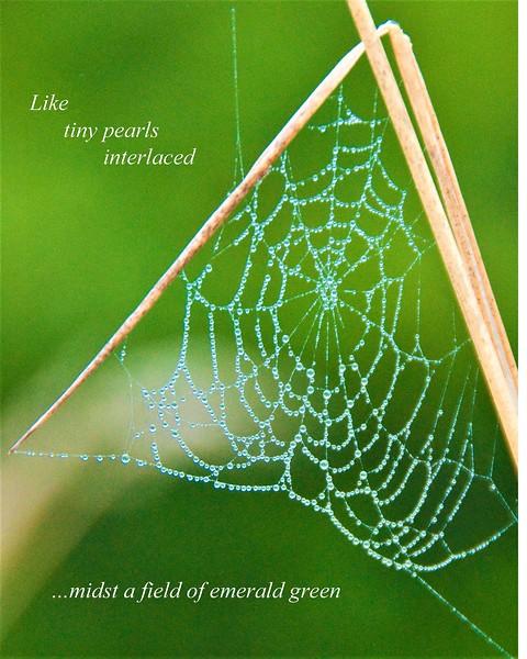 Like tiny pearls interlaced-1.jpg