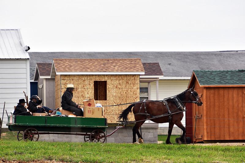 Amish family transporting goods-Back roads-Dalton, Wi -Roper.jpg