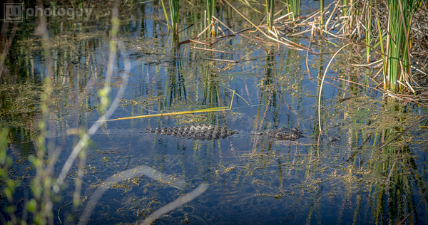 20131218_BIG_CYPRESS_NATIONAL_RESERVE (6 of 8)