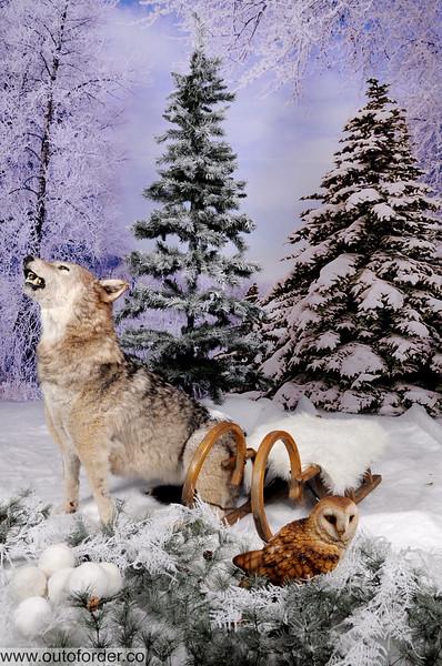 phototheatre-christmas wolf-03.jpg