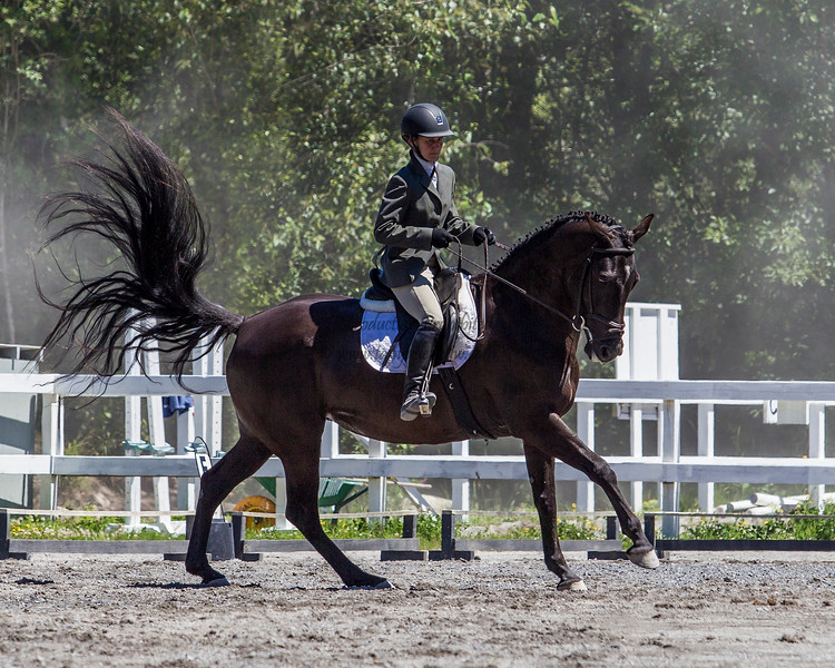 Equestrian - SVEA Dressage - Squamish, June 2016