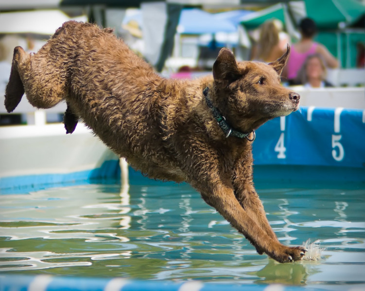 "Dog ""Walking"" on Water"
