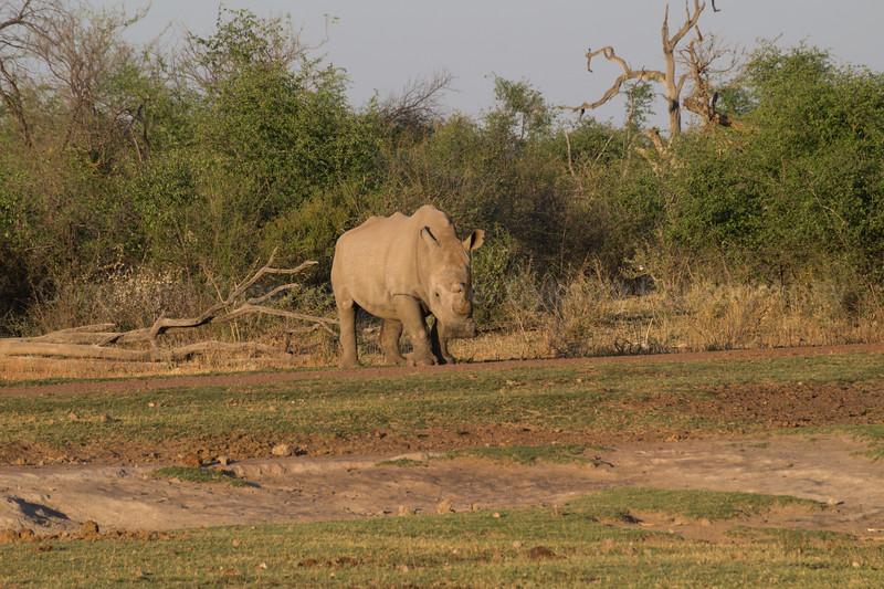 Madikwe-61.jpg