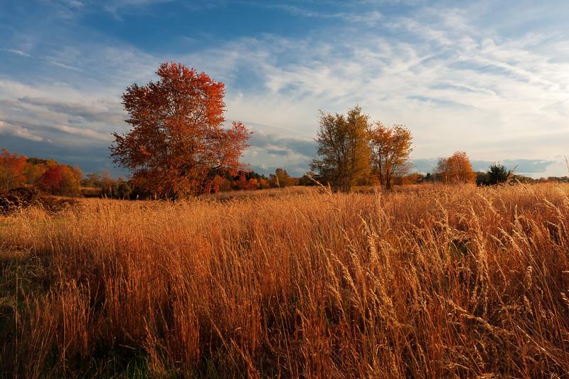 Ginger Fields