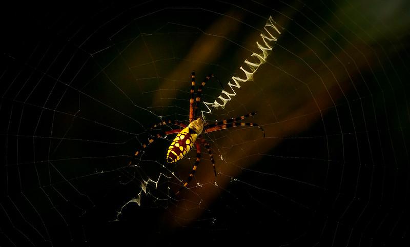 Spiders-Arachnids-147.jpg